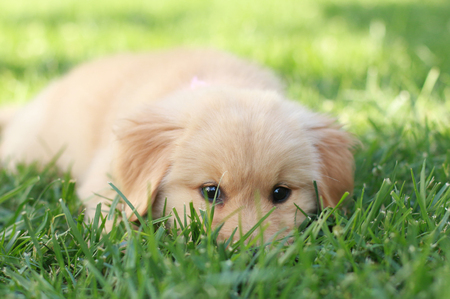 Cute puppy laying in the grass.