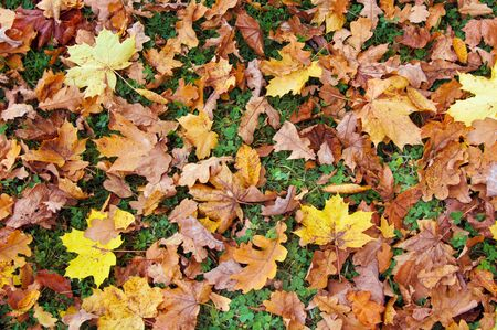 Autumn background. Ground covered with brown and yellow leaves. Archivio Fotografico