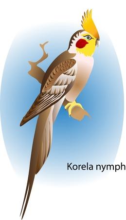 vector parrot Korela nymph Иллюстрация