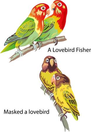 A lovebird vector parrots Stock Vector - 19911010