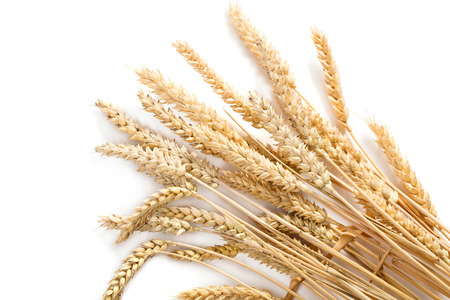 sheaf of ripe wheat ears isolated on white background