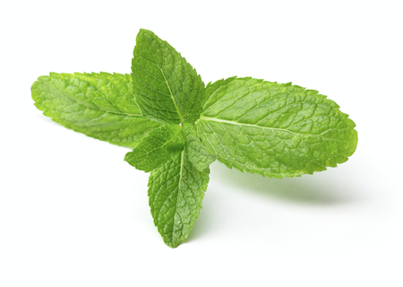 twig of fresh mint leaves isolated on white background