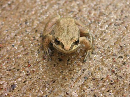 Curious Toad Reklamní fotografie