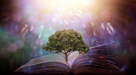 Livre ensorcelé avec magie brille dans les ténèbres