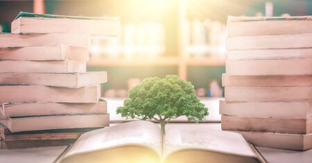 education concept with tree of knowledge planting on opening old big book in library with textbook, stack piles of text archive and aisle of bookshelves in school study class room Reklamní fotografie