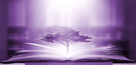 The concept of education by planting a tree of knowledge in the opening of an old book in the library and the magical magic of light that flies to the destination of success. Beautiful background Zdjęcie Seryjne
