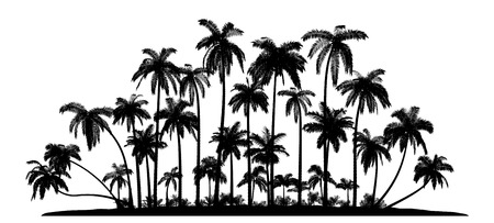 tree silhouettes: A group of high Quality Vector silhouettes of tropical beach palms. Illustration