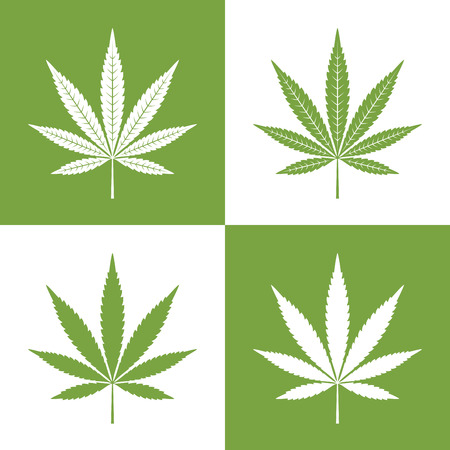 single leaf: Single leaf of marijuana, cannabis