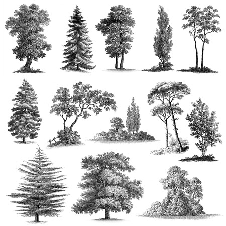 Big set of 13 Vintage engravings reproduced in high quality hand made vintage drawings.