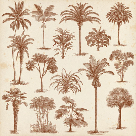 Big set of vintage hand drawn palm tree and bushes illustrations