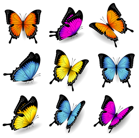 insect flies: Collection of original vector illustrations of colorful butterfly insects Illustration
