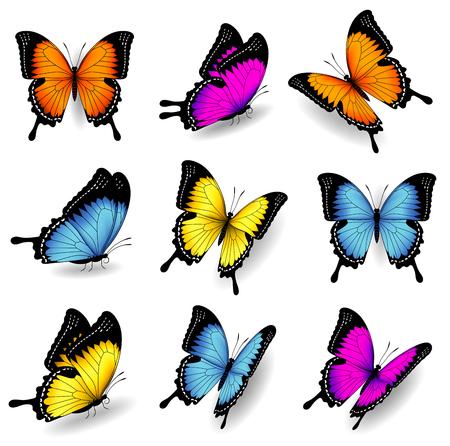 Collection d'illustrations vectorielles originales d'insectes de papillons colorés