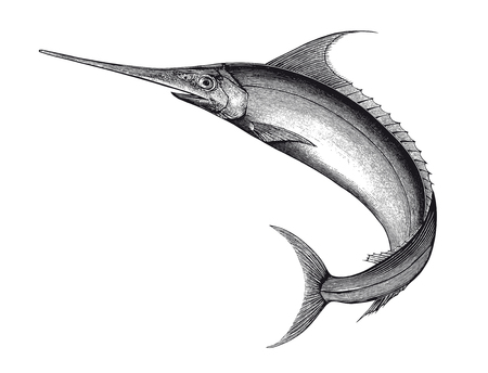 Ilustración vectorial completa Ilustración de un hermoso grabado de pez espada Vintage