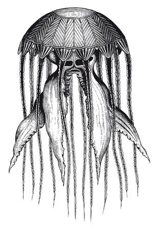 Full Vector illustration Illustration of a High Detail Monstrous Jellyfish Engraving