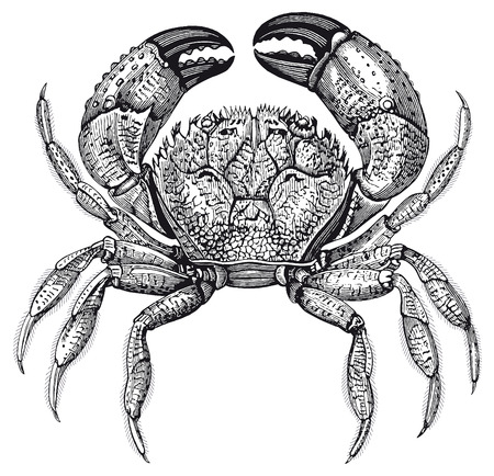 Full Illustration of a High Detail Crab Engraving