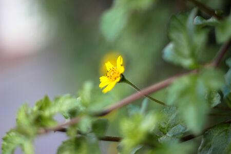 flora: closeup yellow flora