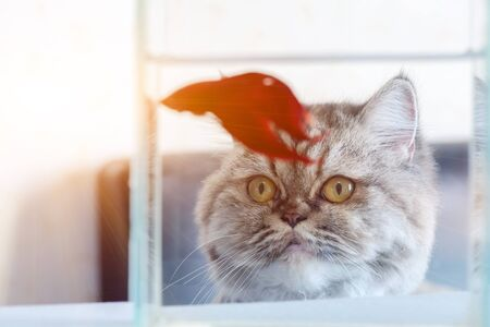 A cat is looking at fish with hunger. Stock Photo