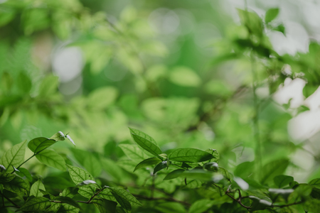 abstract,bokeh leaf pattern nature green background. Stock Photo