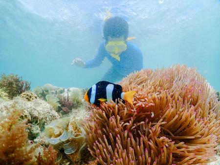 snorkeling on island in the Thailand Ocean. 写真素材