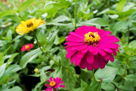 Amazing beautiful colorful flower