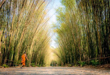 Garden in the Temple, Wat Chulapornwanaram Temple Banco de Imagens