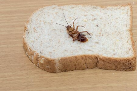 Close up of cockroach on a Whole wheat bread