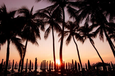 silhouette, Beautiful tropical beach with palm trees silhouettes at sunset. Foto de archivo