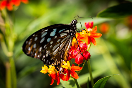 Brown butterfly with flower in the garden  in North of Thailand photo