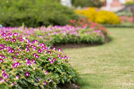 small purple flower: Small purple flower in the garden