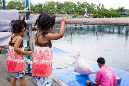 pink dolphin: Two cute little girls having fun to look pink dolphin feeding in the oasis sea world Thailand