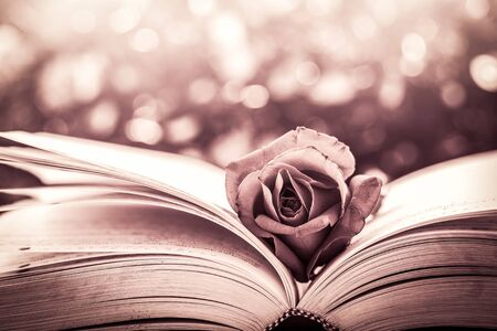 red rose bokeh: Red rose on the open book on bokeh background in vintage color filter Stock Photo