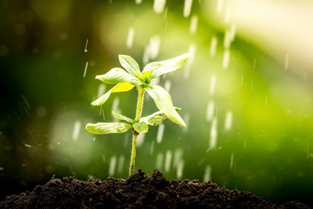 Young plant growing in soil on water drop  background