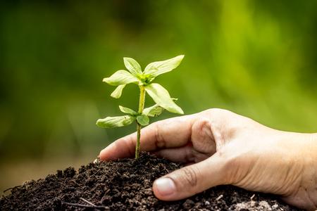 Close-up de hand planten jonge boom in de bodem op groene achtergrond, sparen wereld concept Stockfoto