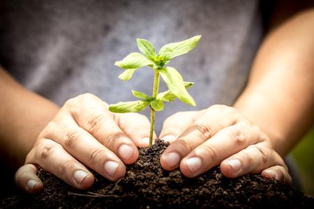 crecimiento planta: plantaci�n manual Primer �rbol joven en el suelo, guardar el concepto de mundo