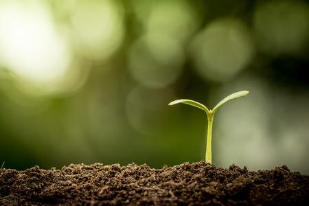 planta con raiz: Planta joven que crece en el suelo sobre fondo verde bokeh