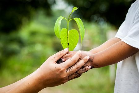Kind met de ouders de hand houden van de jonge boom in de bodem bij elkaar te planten voor te bereiden op de grond, sparen wereld concept