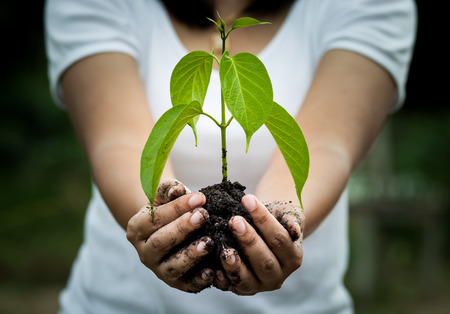 conservation: Woman hand holding  young tree in soil for prepare plant on ground,save world concept Stock Photo