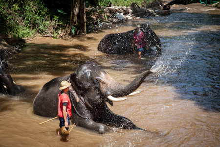 beck: Elephant bathing in the river in sunny day