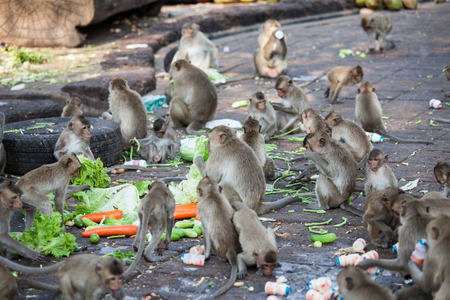 spoiling: Crowd of monkeys scamble food in the park