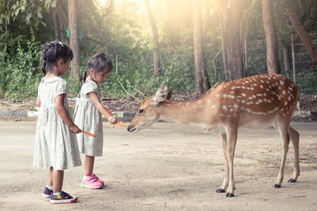 Twee Aziatische meisjes voeden van herten in de dierentuin