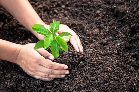 Main de femme plantant jeune arbre sur le sol noir comme concept de sauver le monde dans le ton de couleur vintage Banque d'images - 79375611