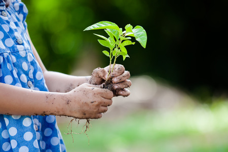 seeding: Child little girl hand holding young tree for prepare plant on ground as save world concept