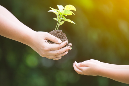 Mothers hand giving young tree to a child for planting together in vintage color tone