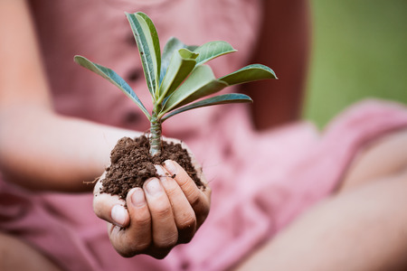 Child hand holding young tree in hands for planting in black soil as save world concept