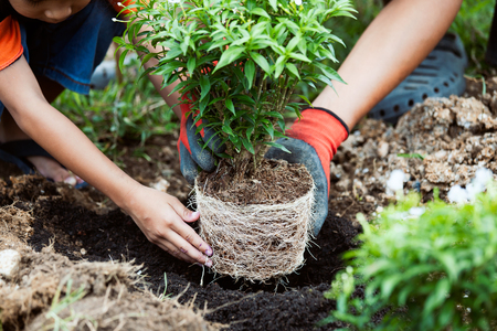 Asian child girl helping her father to plant the young tree in the garden as save world concept Stock Photo