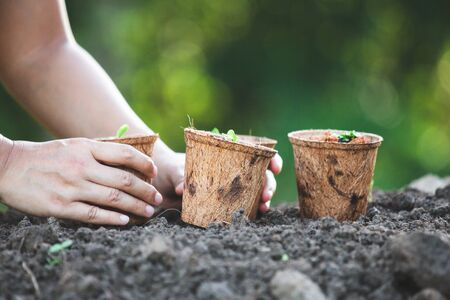 Woman hand planting young seedlings in recycle fiber pots in the garden