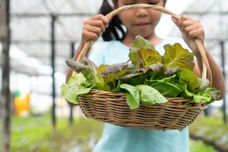 Cute asian child girl holding basket of fresh vegetables in organic hydroponic vegetable cultivation farm