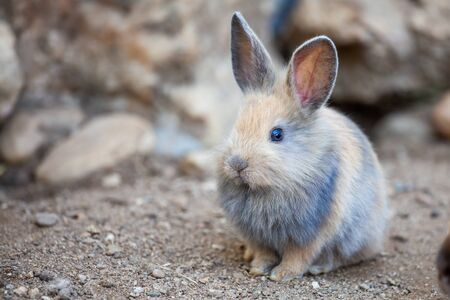 Cute little bunny sitting on the ground. Rabbit in the farm.