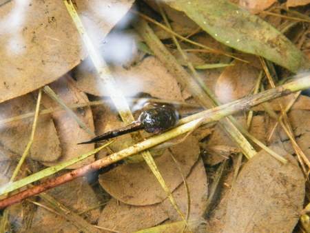 The tadpoles of toad