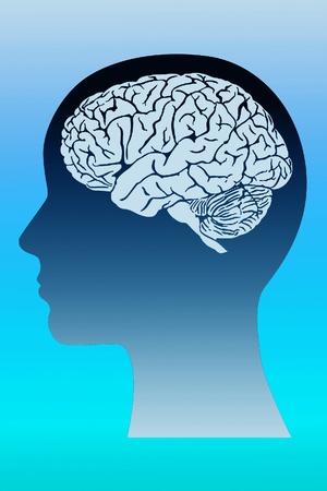 brain research: brain  in a head. Stock Photo